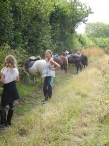 Déjeuner des poneys