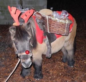 Voltige en assistante du Père Noël