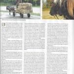 Article-Sabots 02b