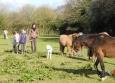 On cherche les poneys au champ
